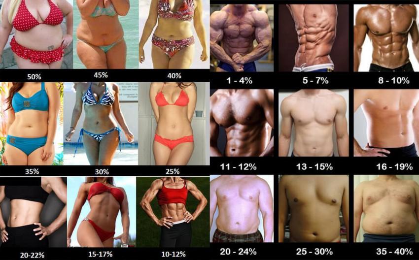 Процент на содржина на масти во телото и (не)дефинирани мускули