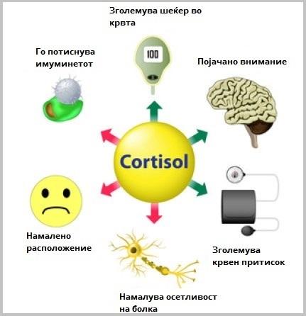 Хормони - кортизол