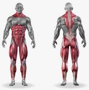 Кои мускули се вежбаат со мртви кревања