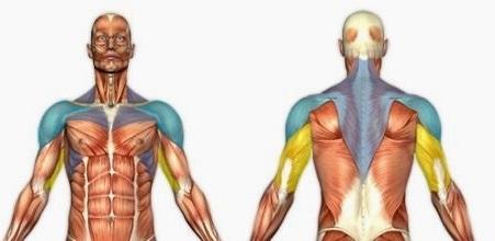 Вежба за рамо - мускули под напор