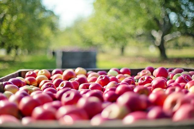 Apples - vitamins and minerals