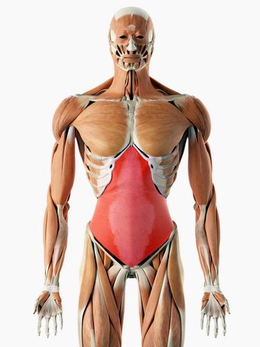 Внатрешен стомачен мускул - вежба за стомачни мускули
